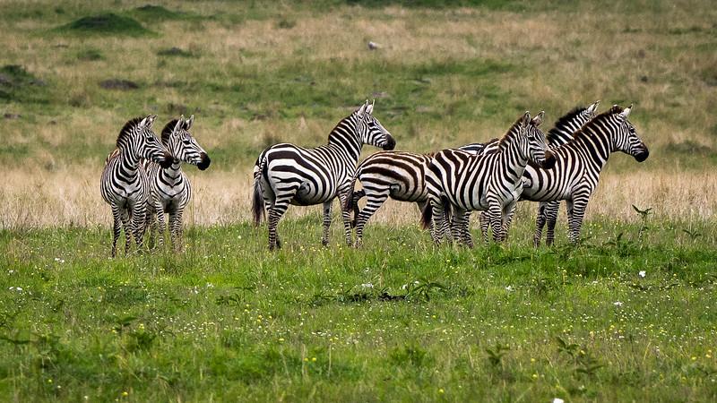 Kenya-0208.jpg