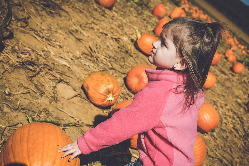 pumpkin picking 10-2016 _IMG_0820.jpg