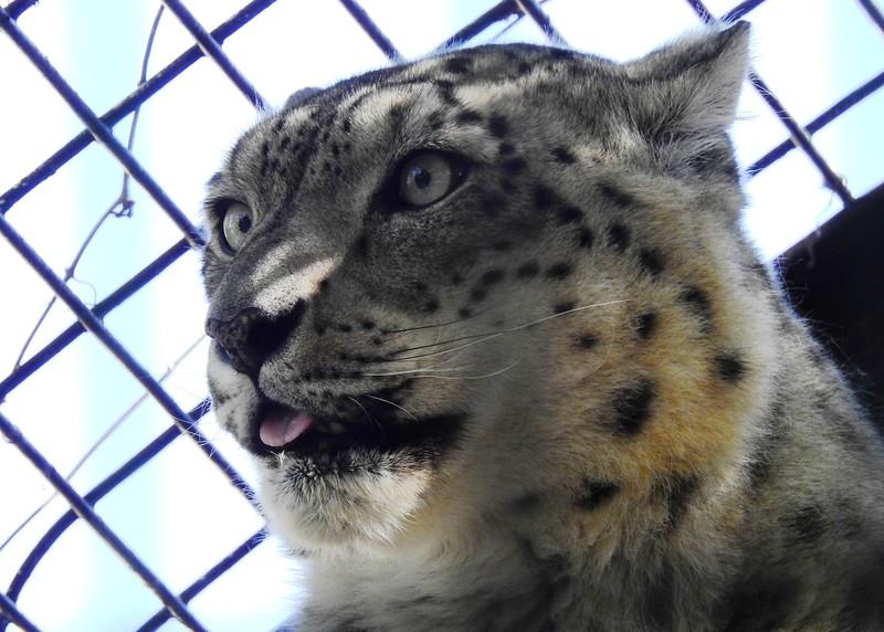 Denver Zoo 2018 (2804).JPG