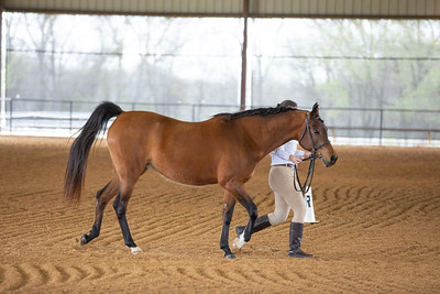 Horse 482