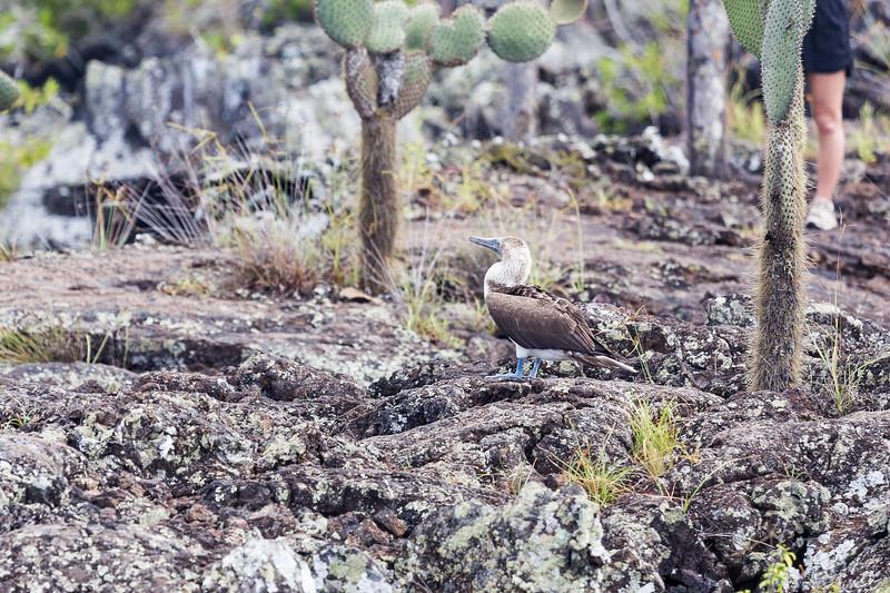 galapagos-jour3-0041.jpg