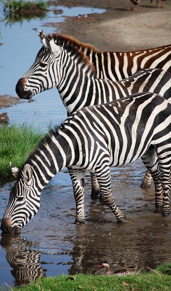 Ngorongoro (12).JPG