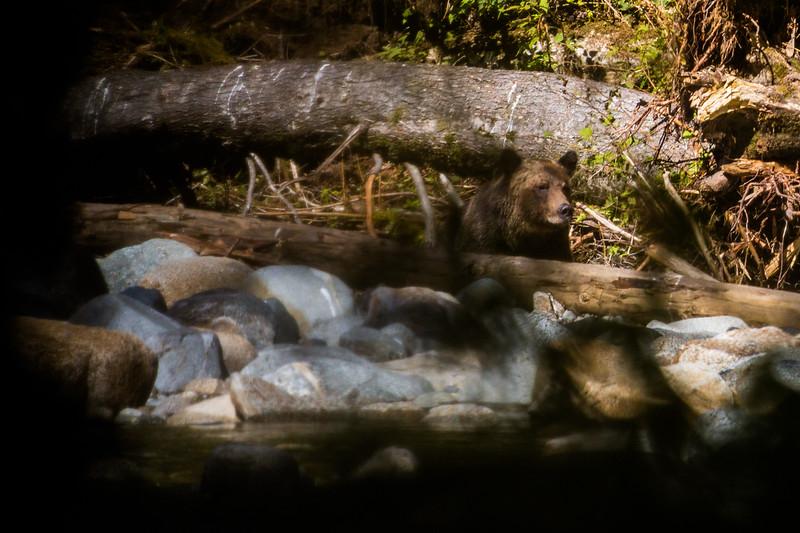 150910_GrizzlyForest_4369.jpg