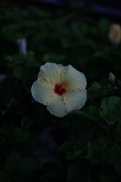 Kauai_D2_AM 121.jpg