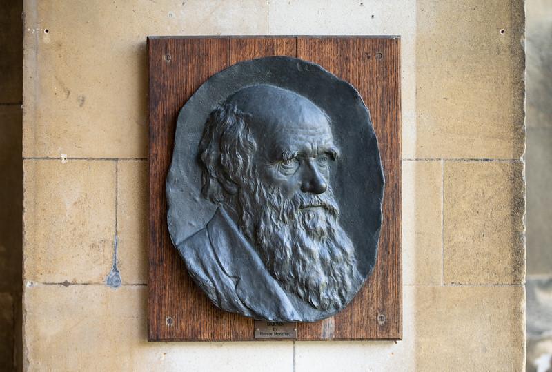 Plaque of Charles Darwin in Christ's College, Cambridge