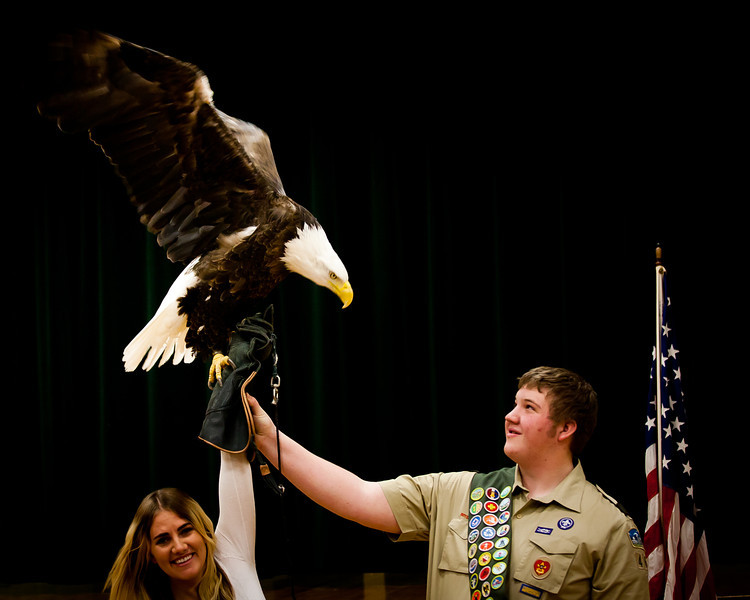 martin eagle-42.jpg