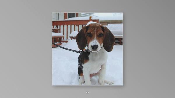 beagle videos