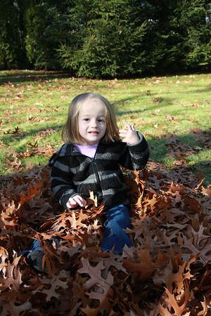 Fall Leaves - Nov 11