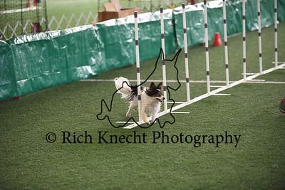 Staten Island Dog Training Club AKC Agility Trial January 27-28