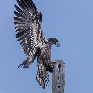 Eagles 2020