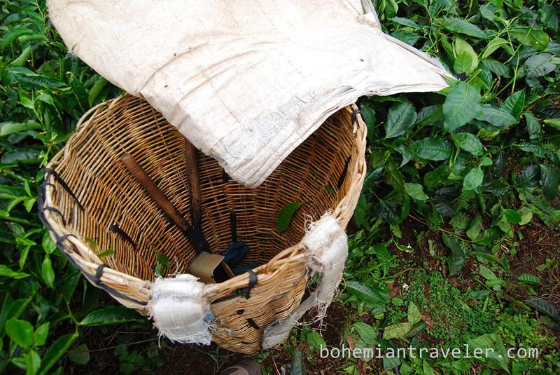 tea basket Cameron Highlands Malaysia [Boh].jpg