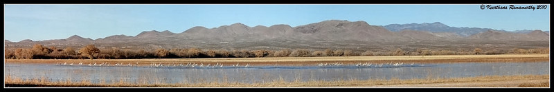 Panoramic view of the sandhill cranes (stitched 27 pictures) at Bosque Del Apache, Socorro, New Mexico, November 2010
