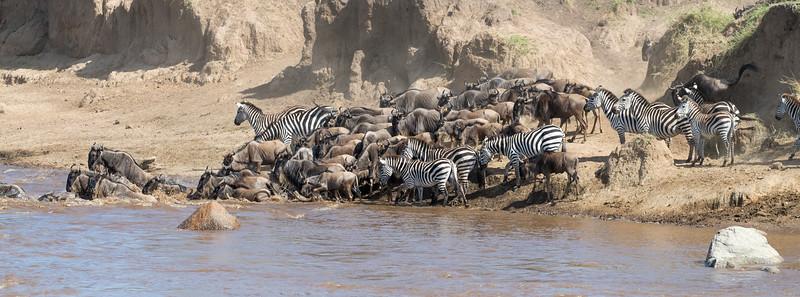Africa  - 101116- 625.jpg