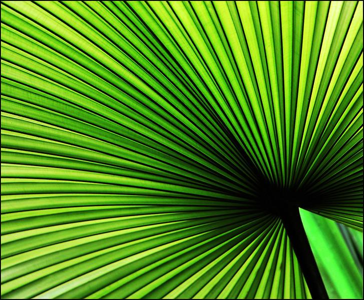 MCC4 elaine Delannoy _Palm Leaf.jpg