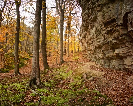 Shawnee Forest