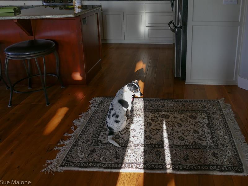 Mattie loves the Turkish rug
