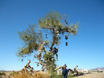 Mojave Road 2009