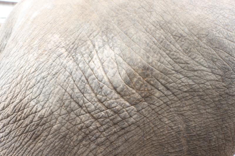 2014-11-14 Surin Elephant Welcome Feast 354.JPG