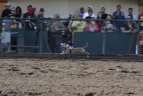 Derby Dog Dash 10-12-13