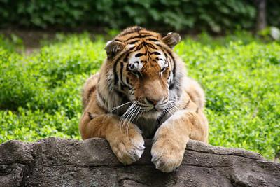May Zoo Trip