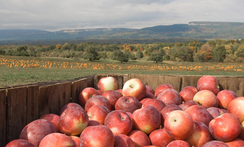 Apples, pumpkins and the ridge in autumn