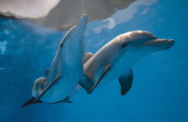 Winter and Hope dolphins