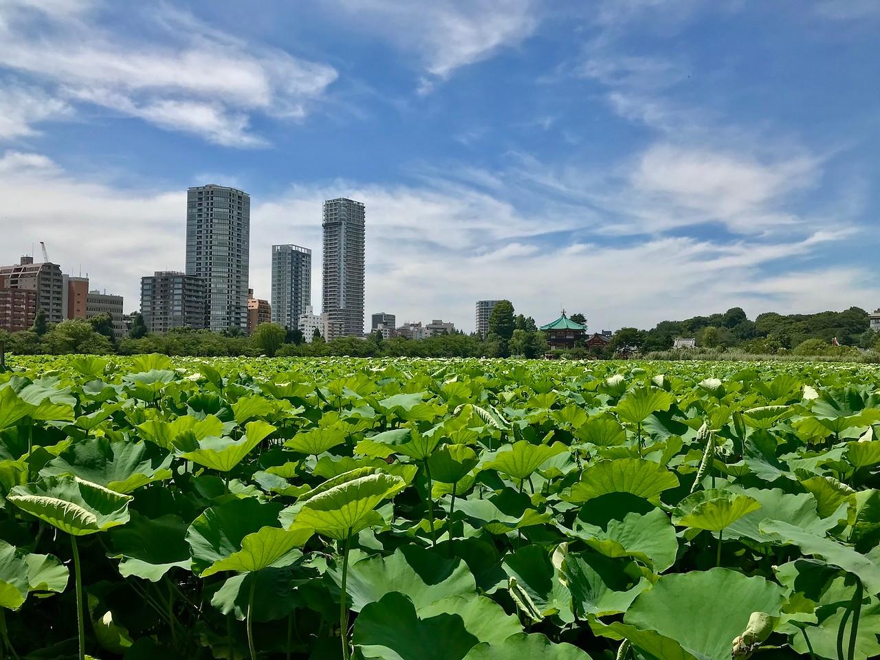Ueno Park