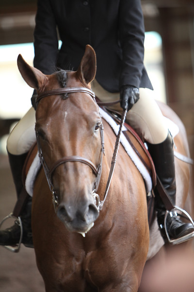 Amateur Hunter Under Saddle