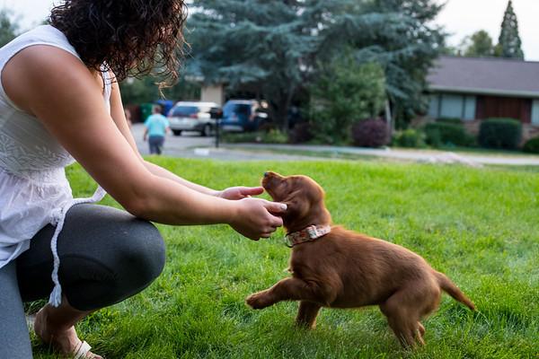 Murphy, the New Puppy