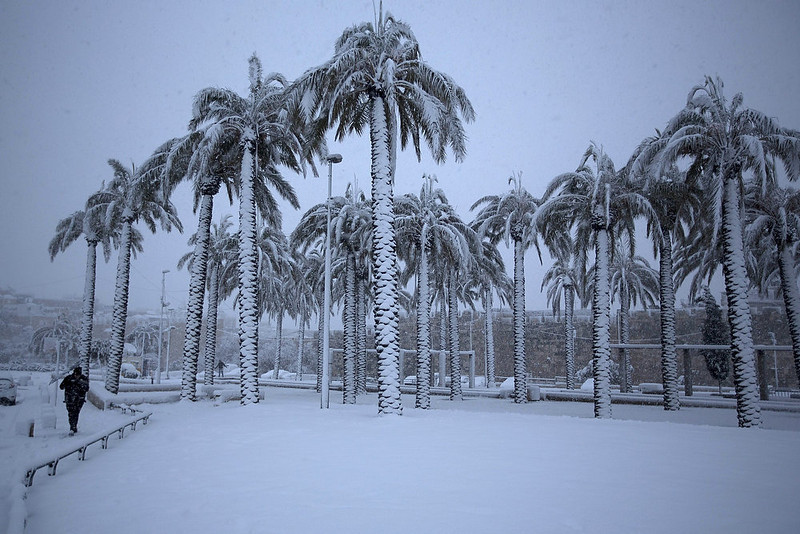 . A man walks near palm trees as snow falls in Jerusalem\'s old city on January 10, 2013. Jerusalem was transformed into a winter wonderland after heavy overnight snowfall turned the Holy City and much of the region white, bringing hordes of excited children onto the streets. MENAHEM KAHANA/AFP/Getty Images