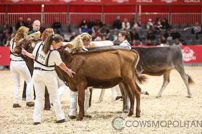 Classic Colored Calves 2017