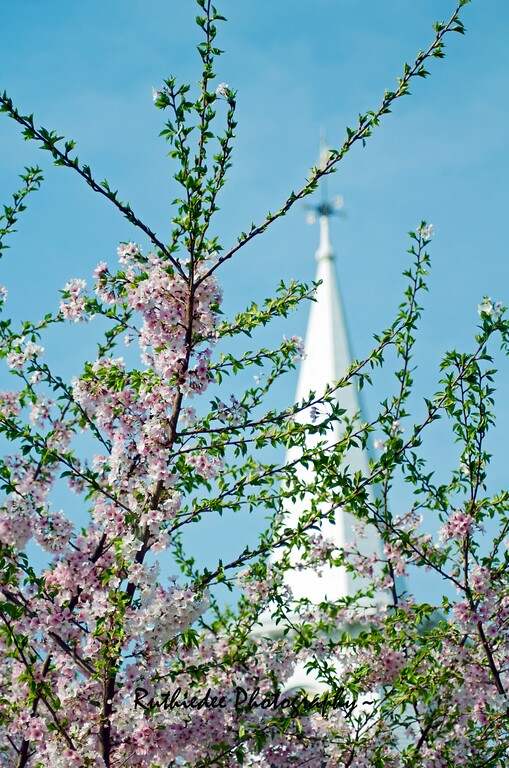 Nature's spire...