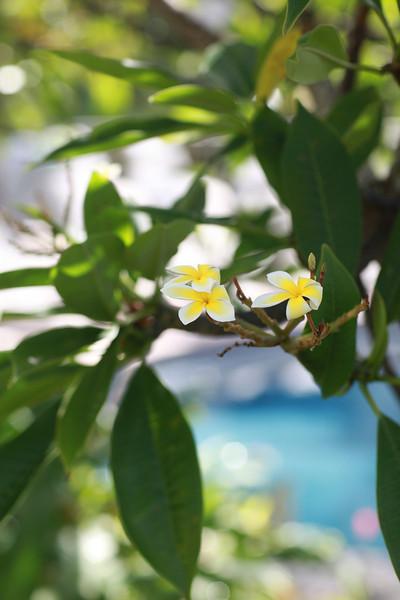 Kauai_D4_AM 199.jpg