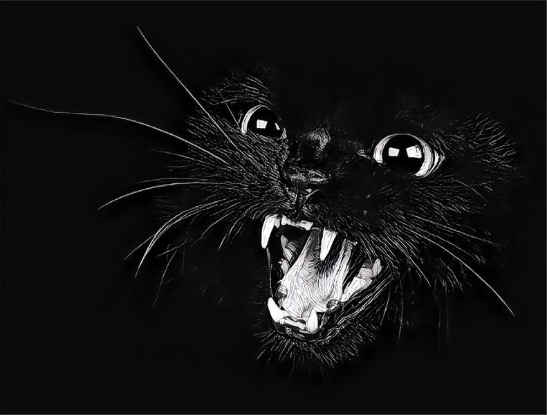 Ferocious Cats2.jpg