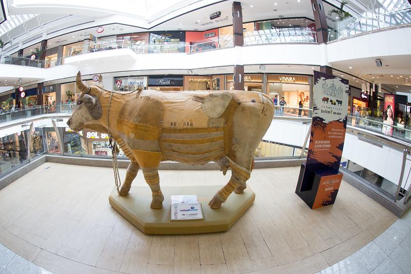 11 Vaca Estradeira_Emanuel Franco (2)