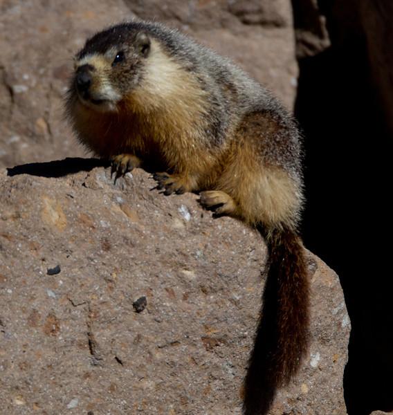 Marmot Upper Gorge   Mammoth Lakes 2014 03 22-4.CR2