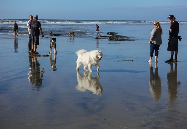 Del Mar CA Dog Beach