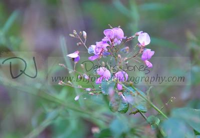 Ha Ha Tonka Flora 2016