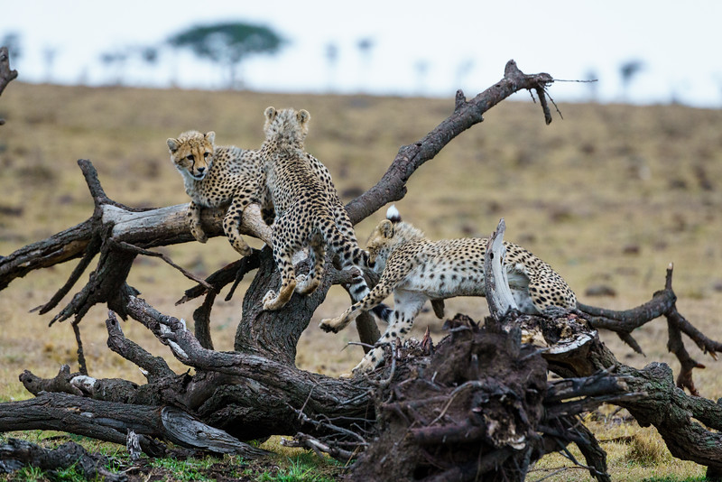 Kenya 2015-08710.jpg