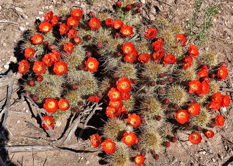 NEA_6227-7x5-Catcus Flowers.jpg