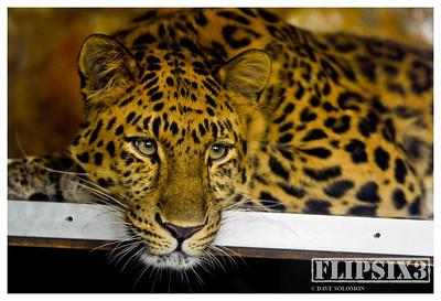 Twycross Zoo 2012