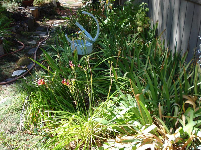 Iris and Tulip Split