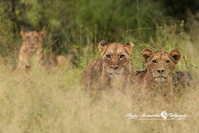 2017 South Africa - Lion Sands Reserve