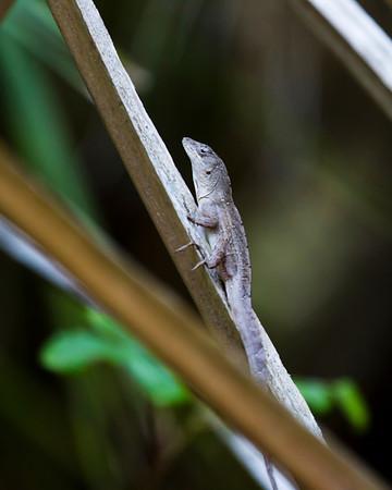 2012 Spring in Florida