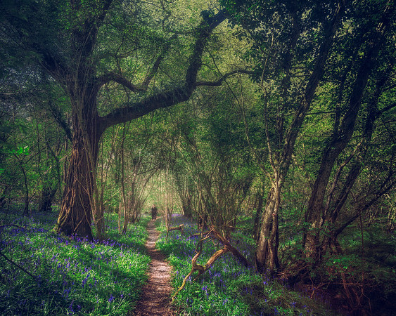 The Woods of Wiltshire
