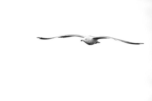 022318_Wetlands Wakodahatchee