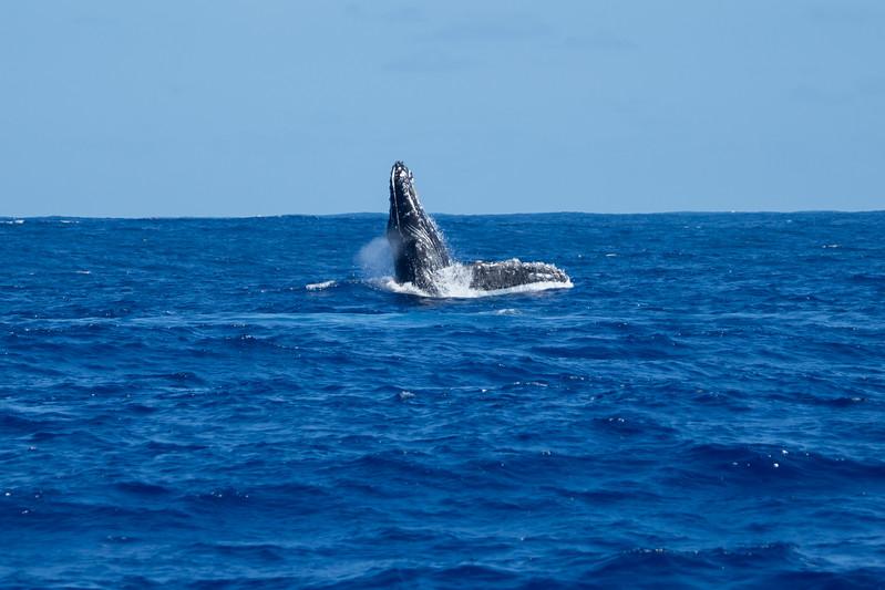 whales-leila-60.jpg