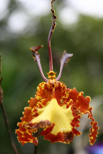 orchids 09 132.jpg
