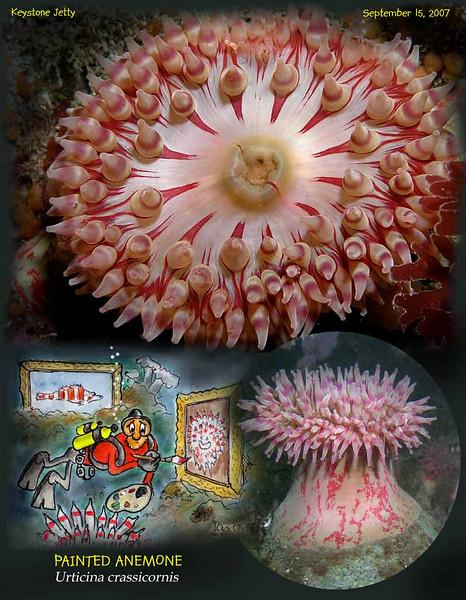 9.15.07 Keystone anemonS.jpg
