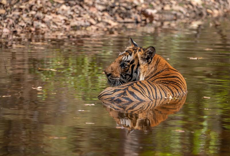 India_April_2019-1070-2.jpg